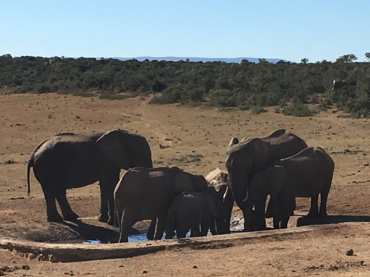 Big five in South Africa