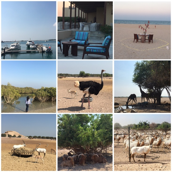 Nature walk at Sir Bani Yas Island